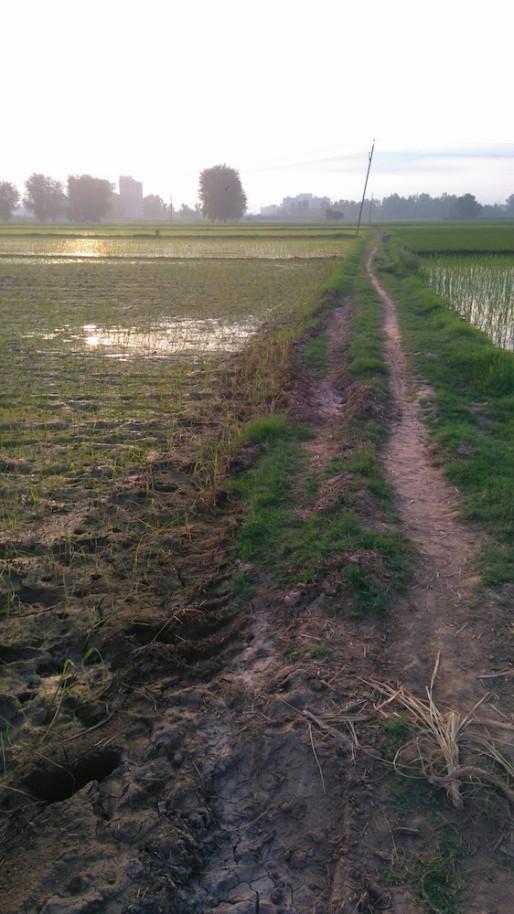 rice path small