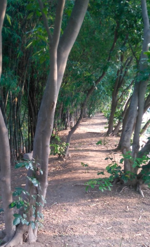 running-path